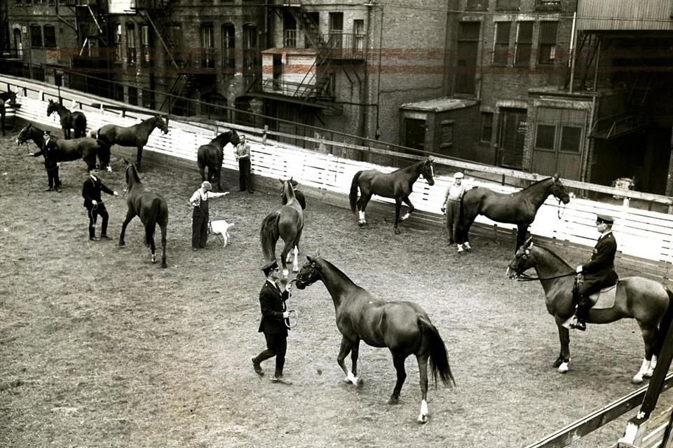 May 18, 1927: Patrolman Patrick Hurley watched the horses being exercised in the corral.